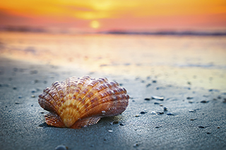 Shell Beach Dramatic Sun_Large-320